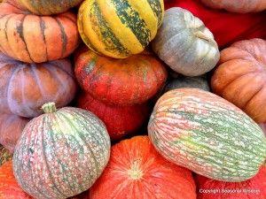 Unusual Pumpkins, Winter Squashes, Gourds from Seasonal Wisdom