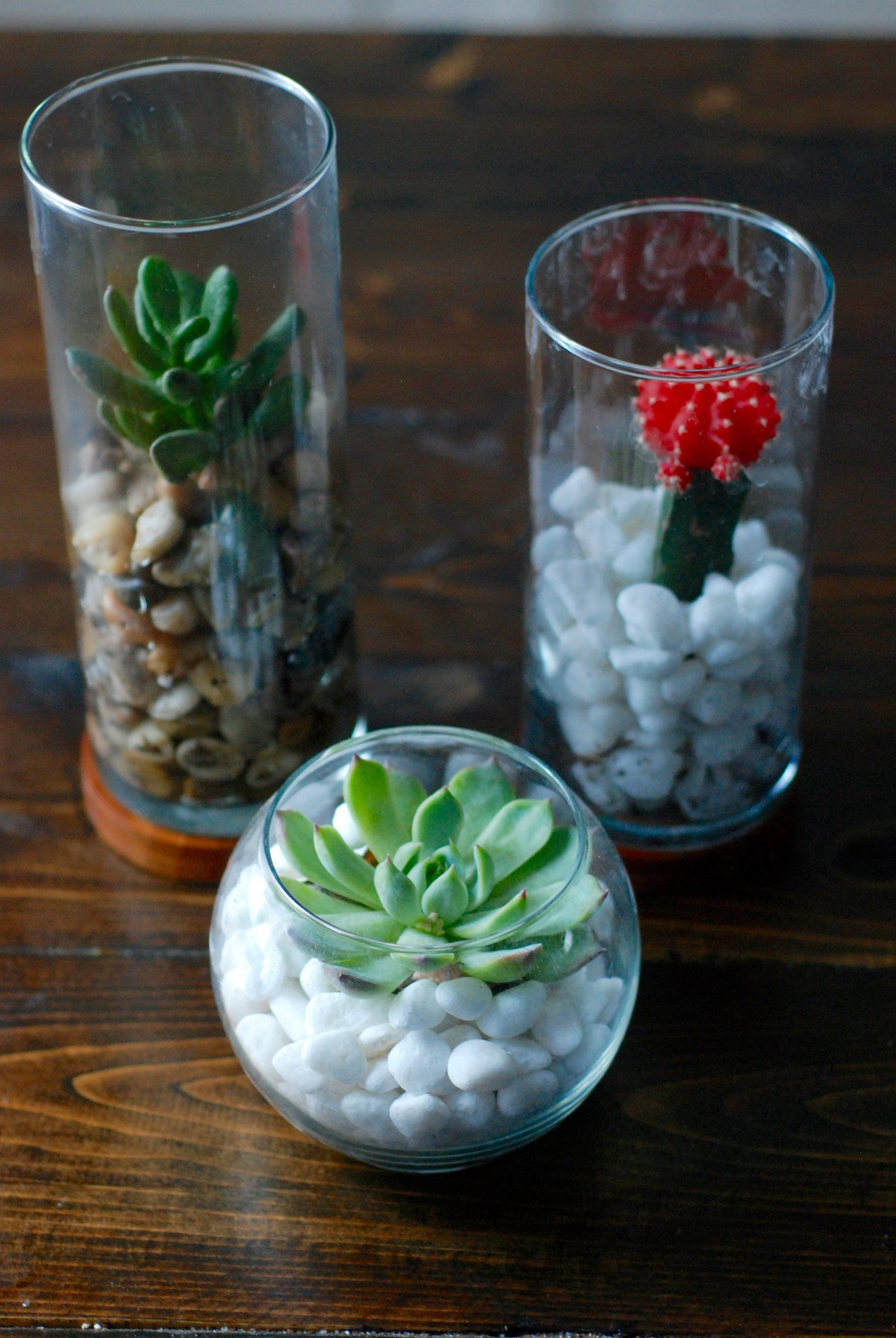 Diy Dollar Store Terrariums Crafts