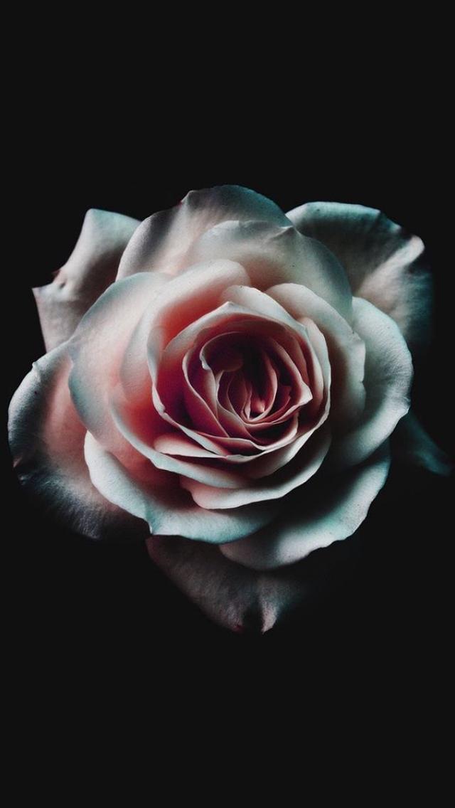 Pin By Rae Abbott On W A L L P A P E R S Dark Wallpaper Beautiful Flowers Wallpapers Iphone Wallpaper Vintage