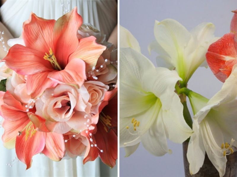 20 best flowers in season in may for your wedding wedding and wedding amaryllis hippeastrum may flowers 20 best flowers in season in may for mightylinksfo