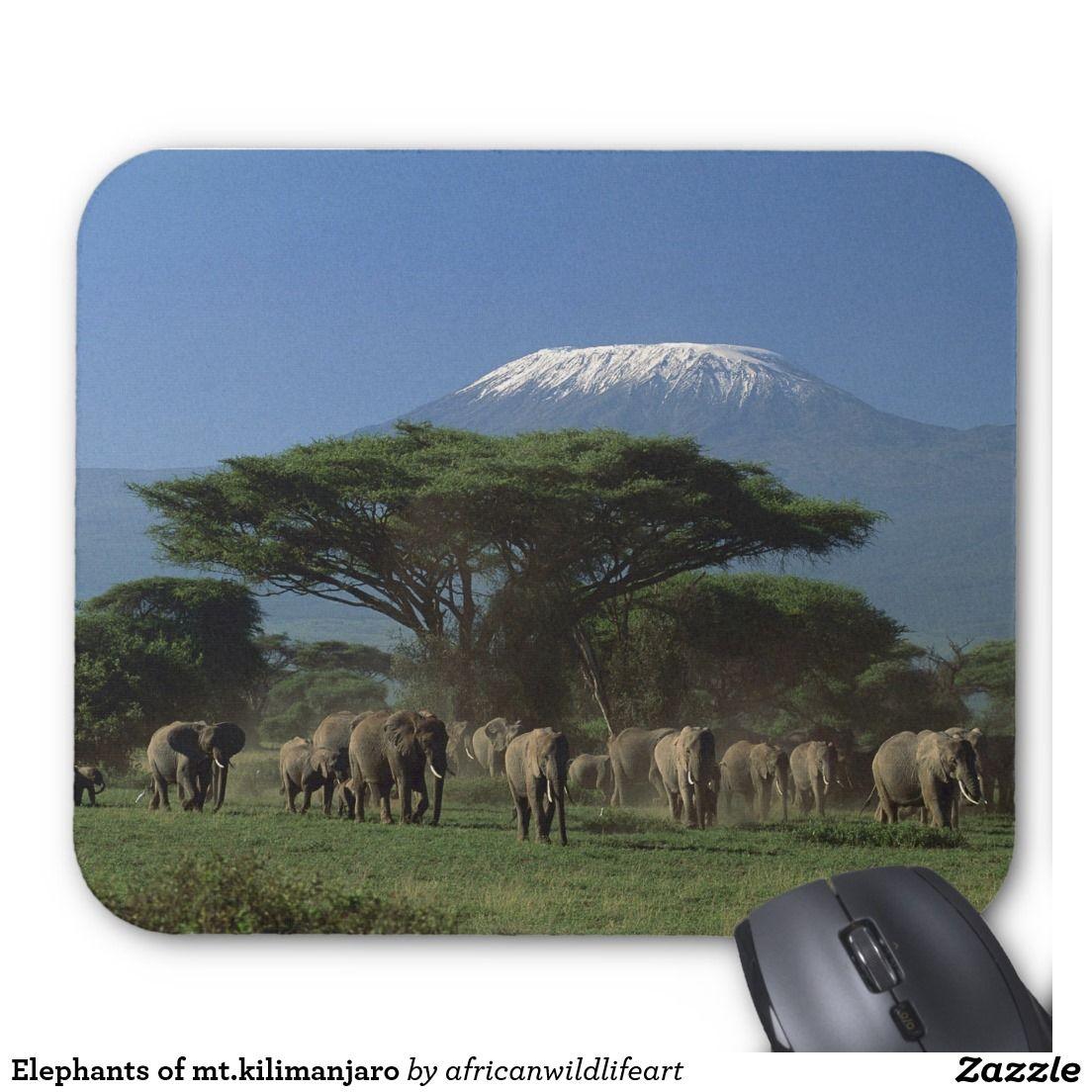 Elephants of mt.kilimanjaro
