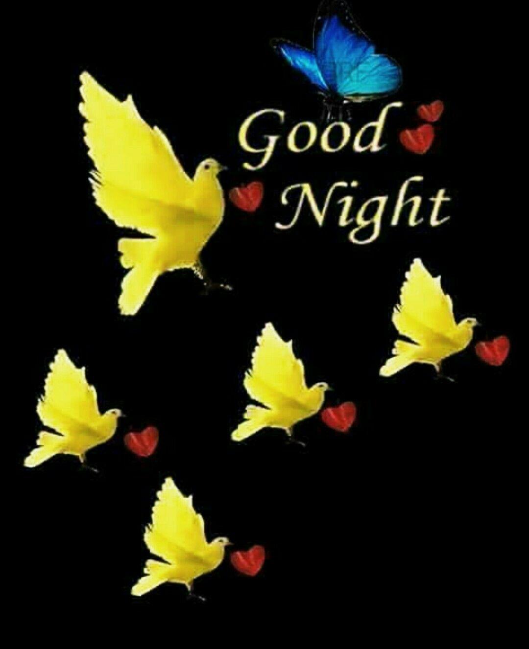 Birds Of Paradise S Good Night Image Good Night Good Night Quotes