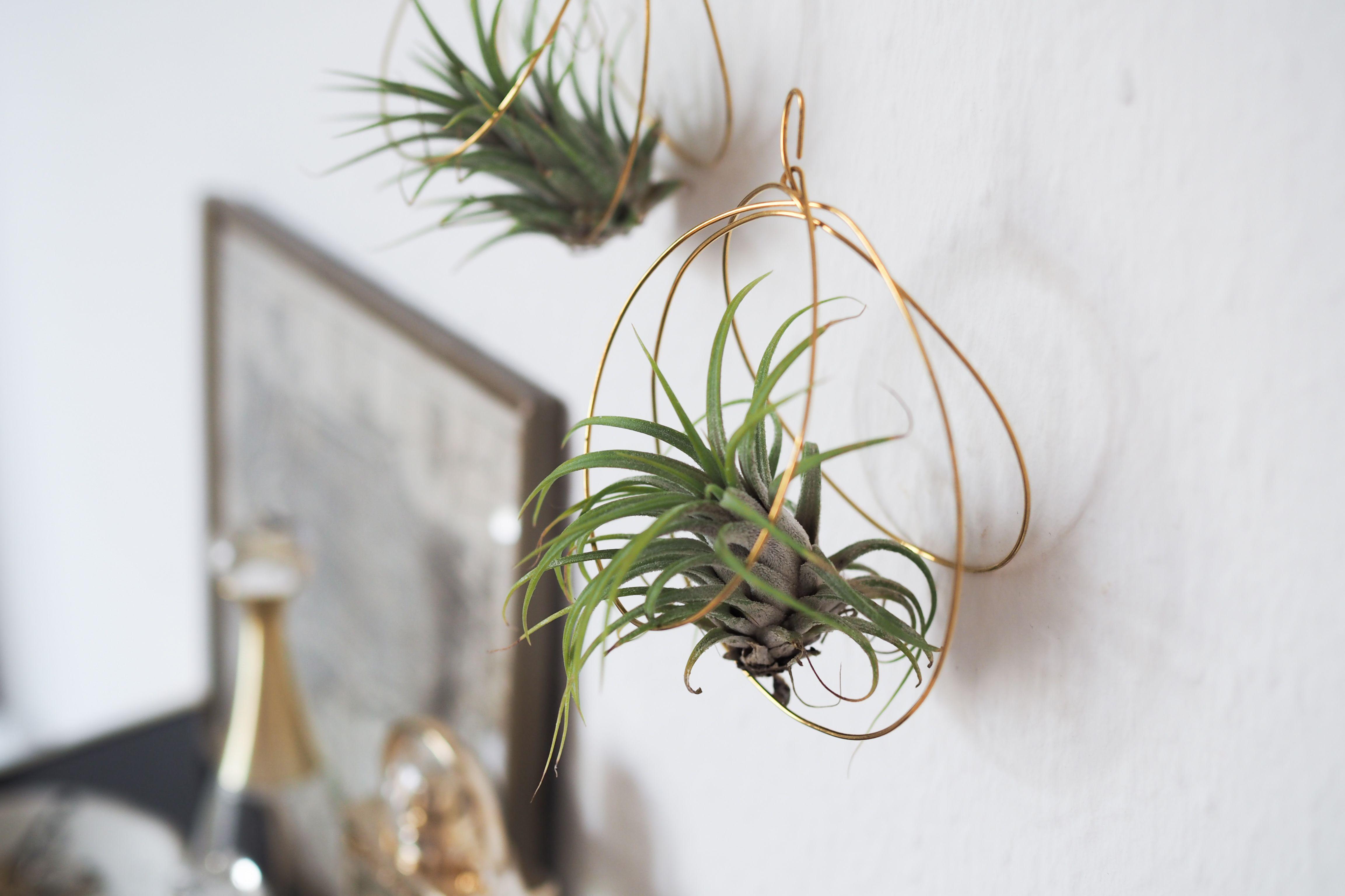 DIY: Luftpflanzen Halter aus Draht   Upcycling and Craft