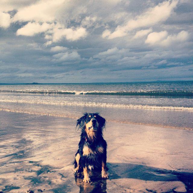 Life's a beach for Brogan - puppy love