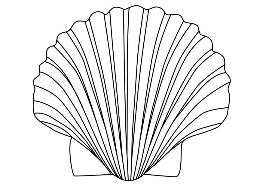 bildergebnis für seestern zum ausmalen  dessin shell