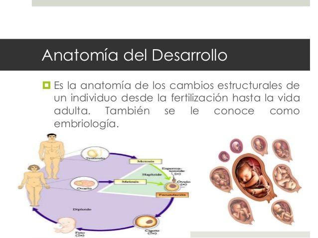 Resultado de imagen de anatomia del desarrollo definicion ...
