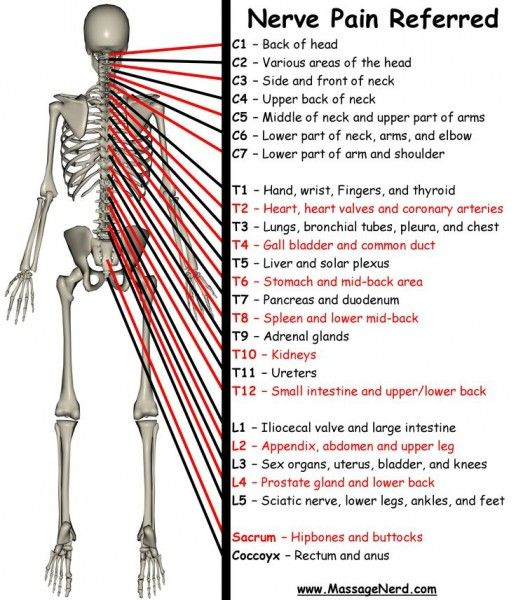 Nerve Pain Referred Area And Effectsdermatome Chart Zeros