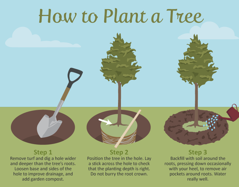 Selecting The Right Tree For Your Garden Trees To Plant 400 x 300