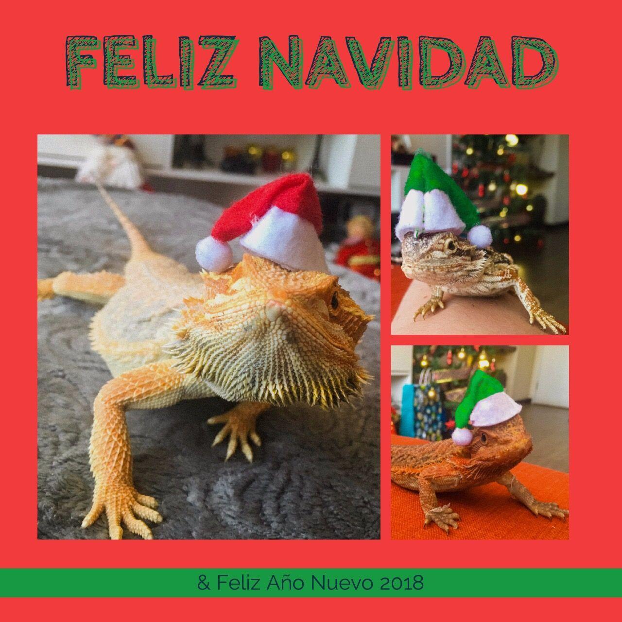 Dragon barbudos navidad   Dragón barbudo   Pinterest   Dragones y ...