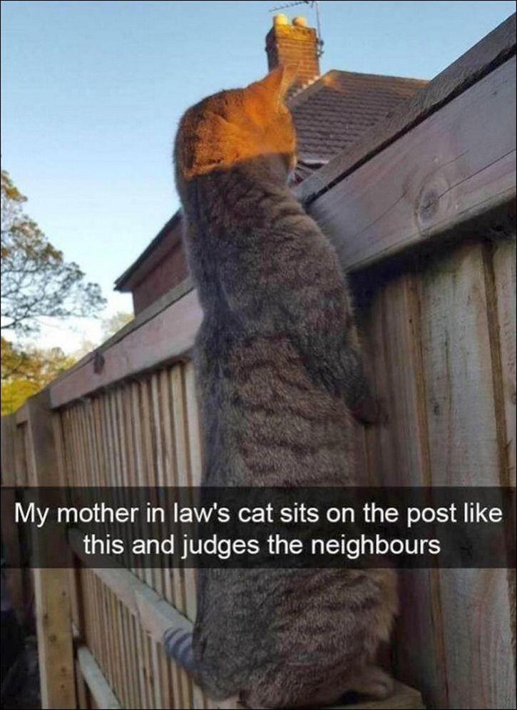 55 lustige Tierbilder des Tages - Tiere Blog #funnypictures