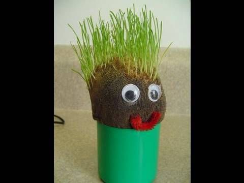 How To Make Your Own Chia Pet Grass Head Pet Grass Chia Pet Diy Birthday Gifts