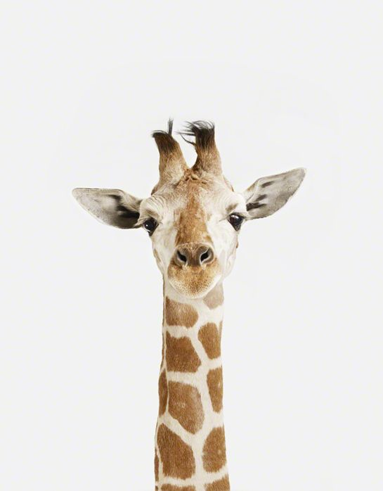 lushise:  cute