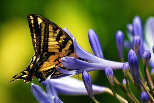 через объектив: Красивые фотографии бабочек   Фотографии ...