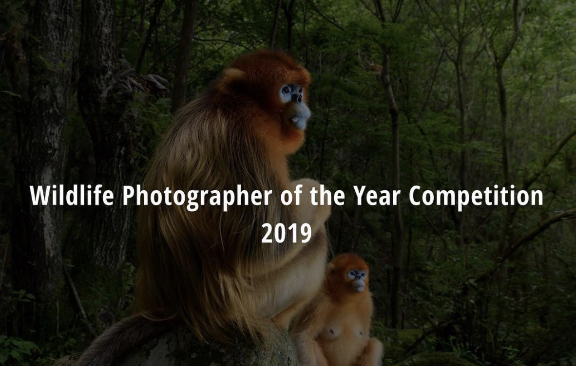 Wildlife Photographer Of The Year Competition 2019 Museum Nature Museum London Museums