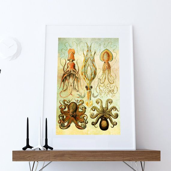Ernst Haeckel Gamochonia Print Octopus & Squid Art Vintage Nautical ...