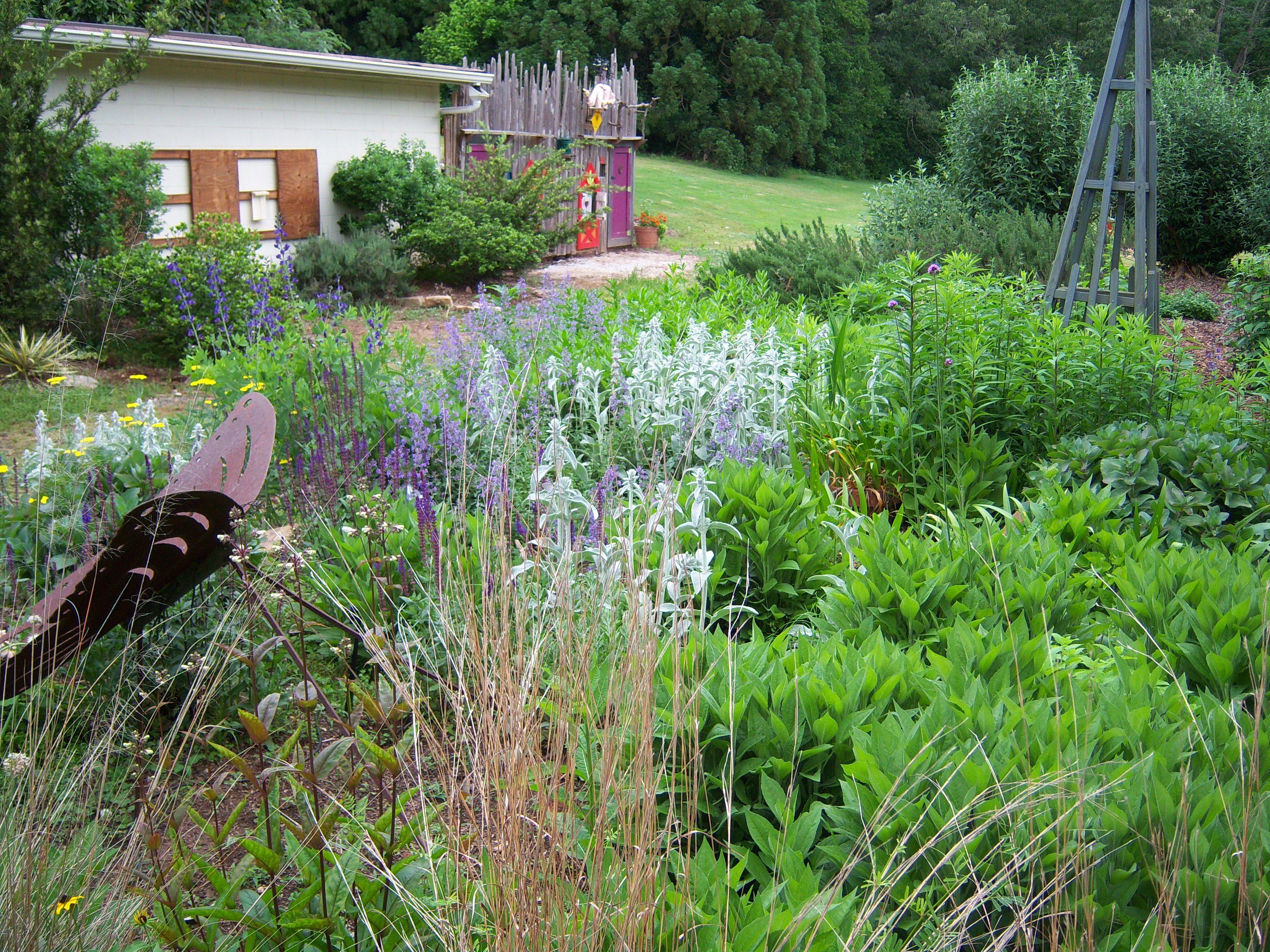 sc botanical gardens, clemson, sc | people, places, animals, home