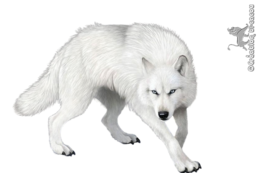Render animaux renders loup blanc animaux loup blanc loup et animaux - Modele de loup a imprimer ...