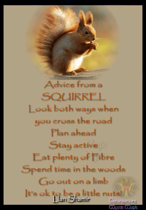 Advice from a squirrel Good morning quotes