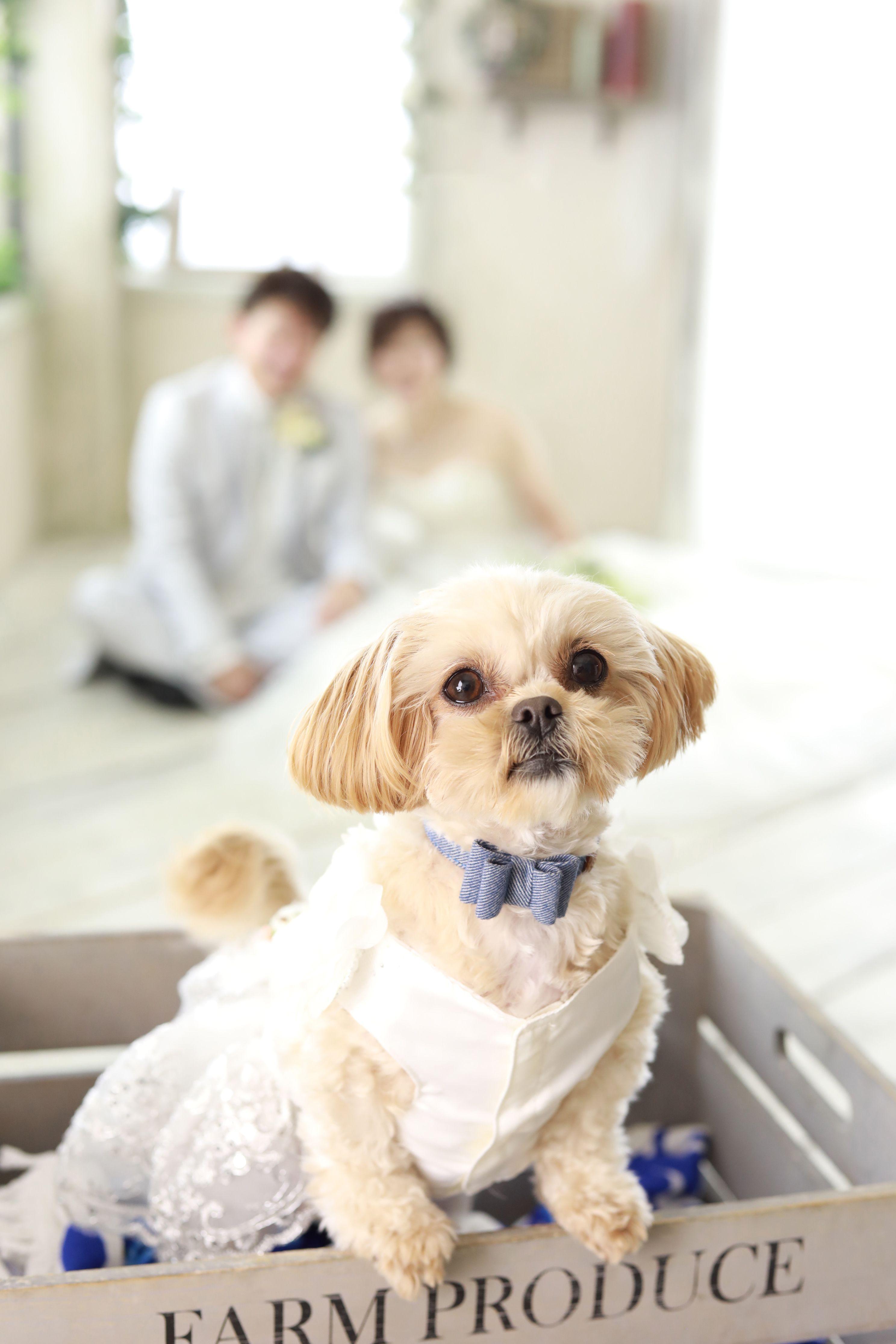 Pets Photo おしゃれまとめの人気アイデア Pinterest ブライダルフォトウェディング アンシャンテ Enchant ウェディングフォト 結婚式 ペット 結婚写真