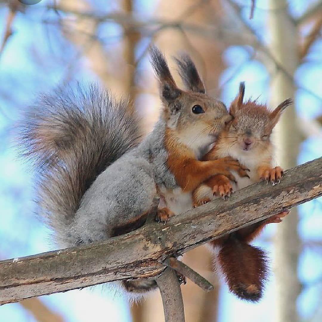 """Lilly Huber on Instagram: """"From : BEAUTIFUL #eichhörnchen  #squirrel  #ecureuil  #tierphotographie  #tiereimwinter  #tierbeobachtung  #eichhoernchenliebe…"""" #cutebabybunnies"""
