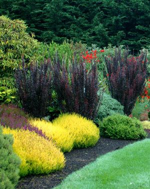 Garden Design With Using Contrast As A Guide In Landscape Year Round Plants For Landscaping From Singingtreegardens