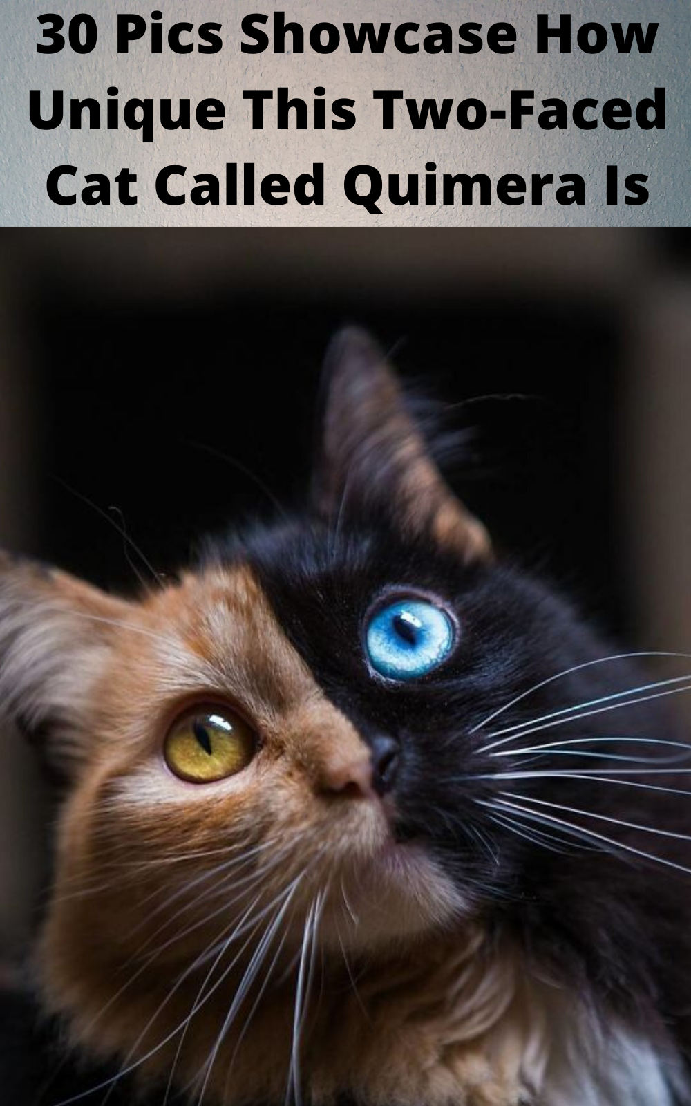 30 Pics Showcase How Unique This Two Faced Cat Called Quimera Is In 2020 Two Faced Cat Cat Call Cats