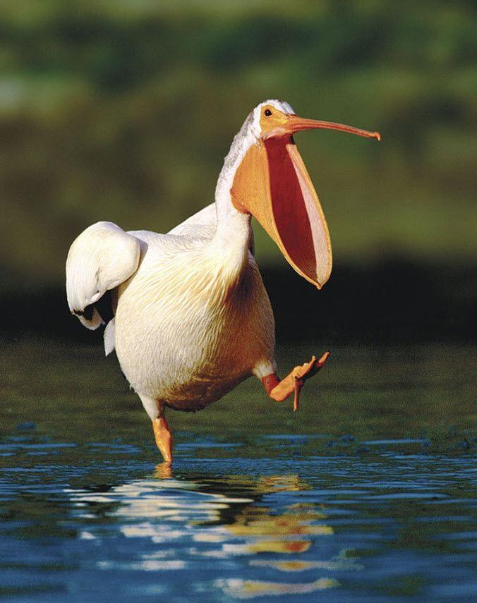 Смешные и забавные животные | Домашние птицы, Птицы и ...