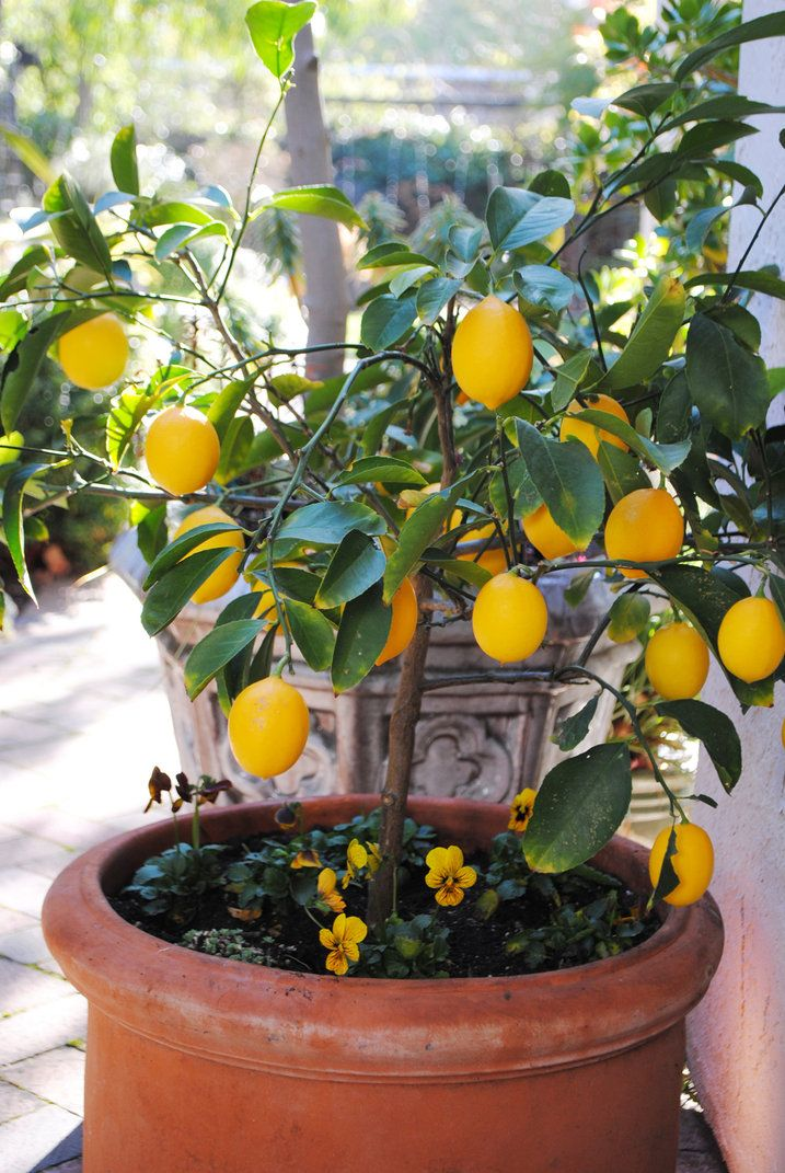 Underplanting Containers Utilise Valuable Space In Your Container Gardens By Adding Colour O Container Gardening How To Start Small Garden Growing Vegetables