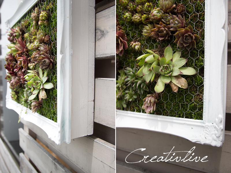 Wandbegrünung creativlive diy mini wandbegrünung house garden