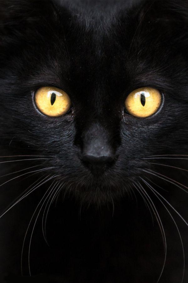 Čierna mačička upclose