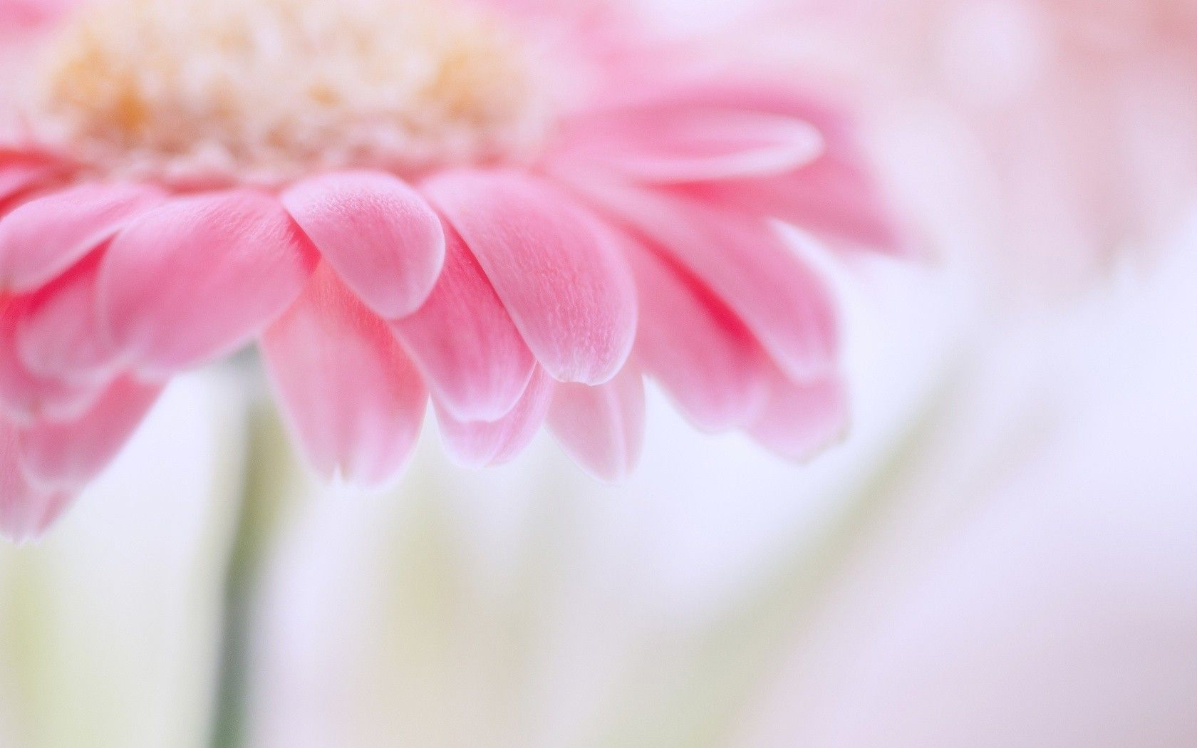 Great Pink Flower Wallpaper