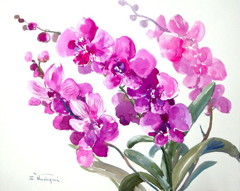 Bright pink orchids original watercolor painting 20 x 16 in pink bright pink orchids original watercolor painting 20 x 16 in pink white minimalist mightylinksfo