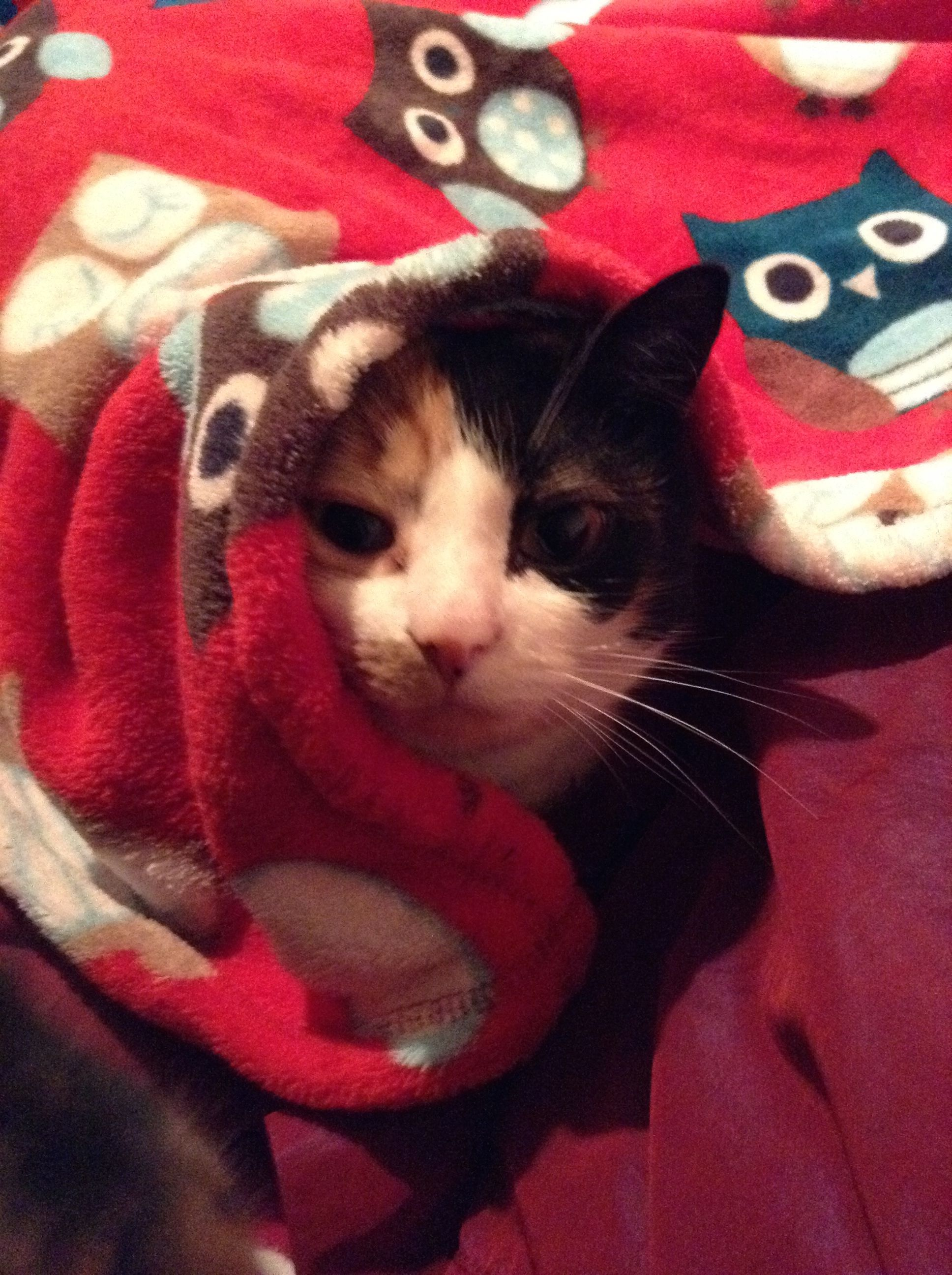 Sushi in a blanket