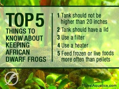 African Dwarf Frogs Wee Scaly Cutie Beasties Pinterest Dwarf