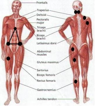 Fibromyalgia Trigger Points Effectively Treated With A Tennis Ball