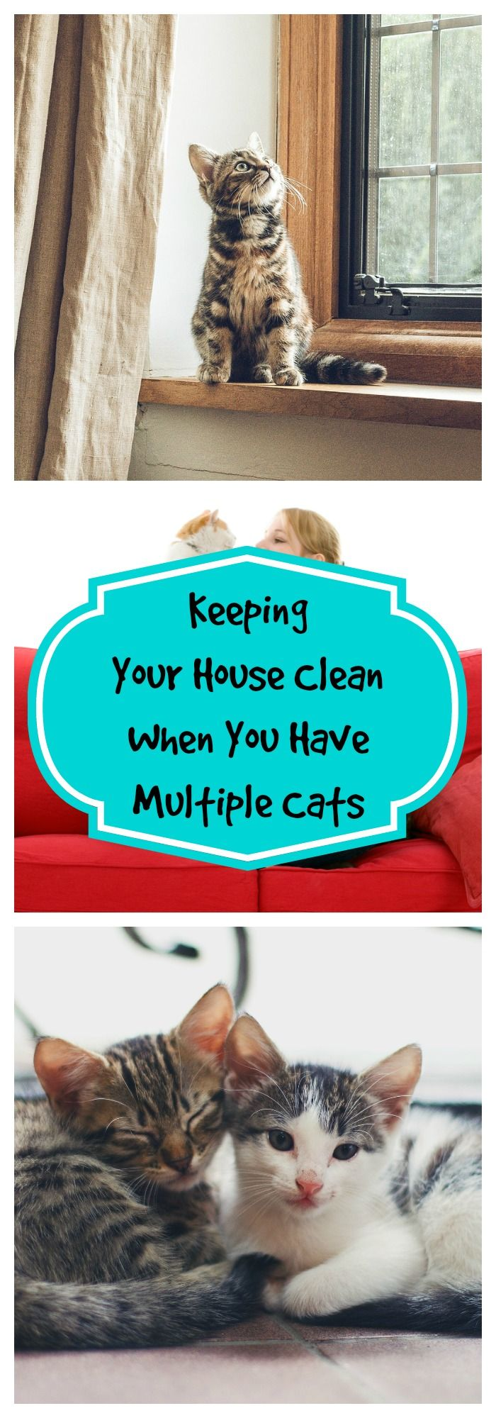 Keeping Your House Clean When You Have Multiple Cats