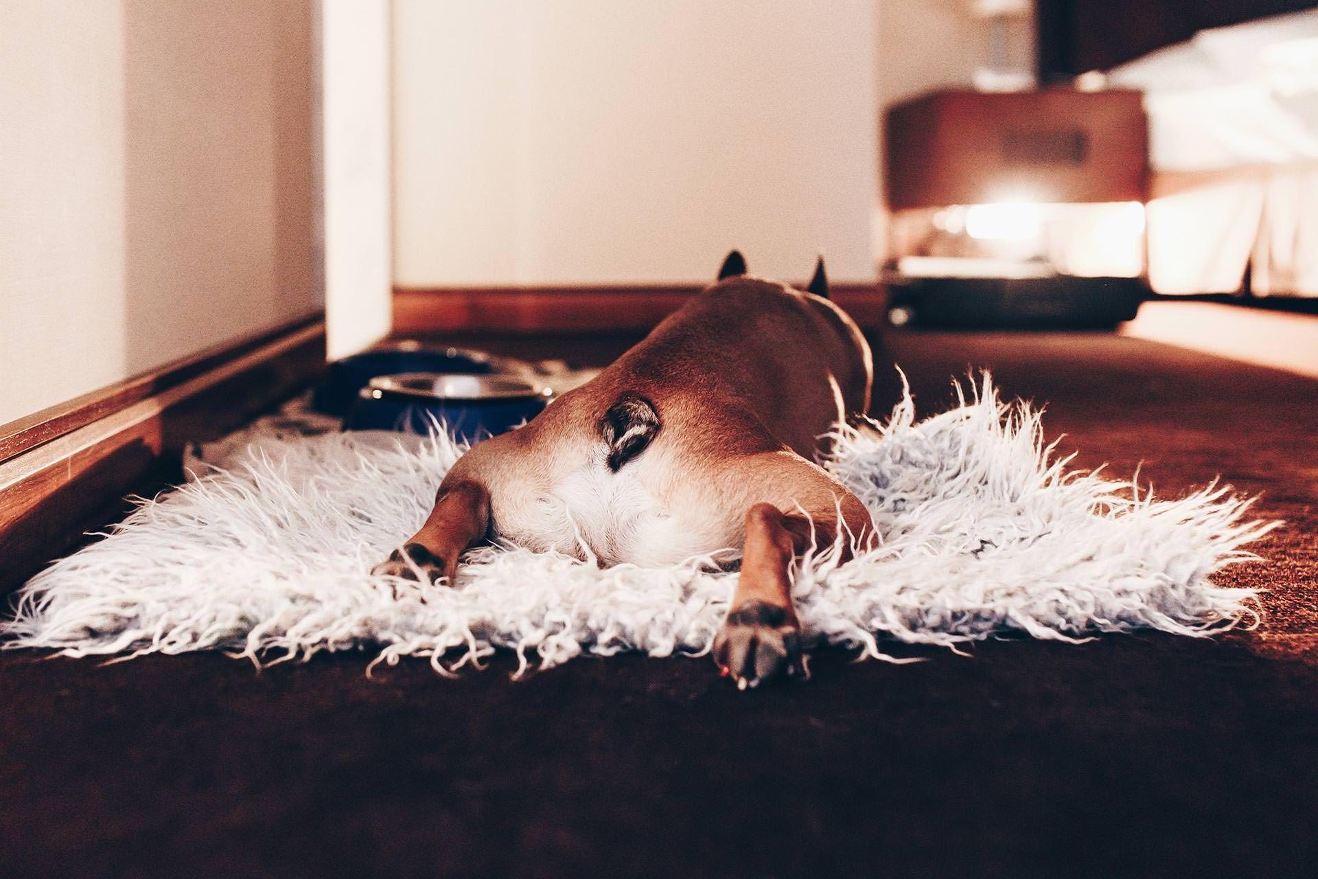 Urlaub Mit Hund In Osterreich Direkt Am See Urlaub Mit Hund Im Hotel Am Worthersee In Karnten Urlaub Mit Hund Im Schloss Urlaub Mit Hund Hunde Hund Und Katze