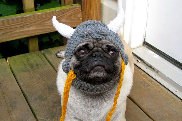 Dogs In Hats Funny Pug Pictures Animaux Rigolo Animaux Rigolo