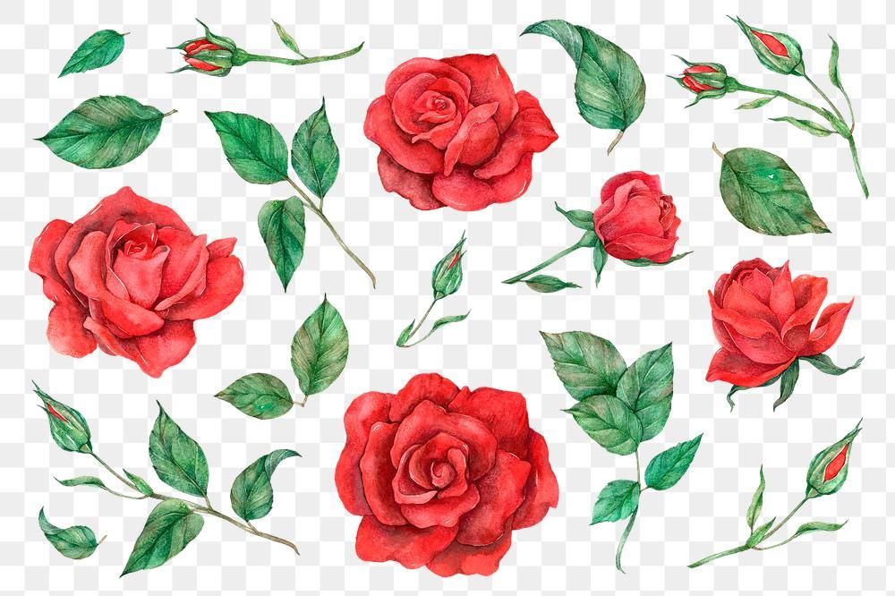 Png Rose And Leaf Set Vintage Style Free Image By Rawpixel Com Boom Red Rose Flower Painting Style Free Illustrations
