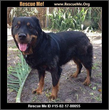 Florida Rottweiler Rescue Adoptions Rescueme Org Rottweiler
