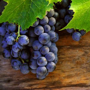 """April 17 is World Malbec Day"" on Food24 Wine Club"
