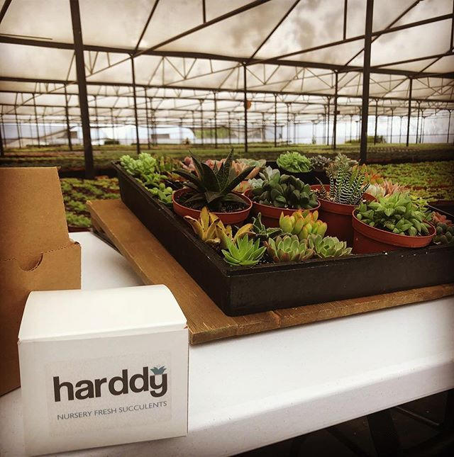 We Want Your Experience To Be As Enjoyable Going A Market Or Local Nursery If You Re Not Having Fun Ing Succulents Then Doing It Wrong