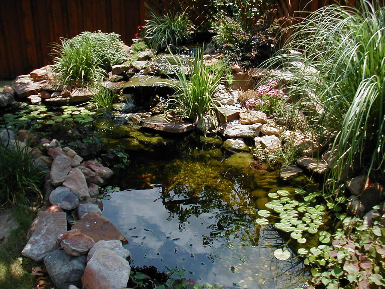 Pond gardens rancho santa fe pond service pictures for Small pond landscaping ideas