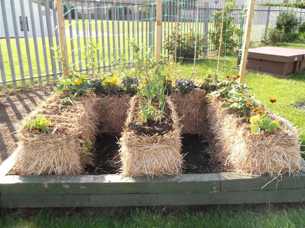 Straw Bale Gardening Raised Vegetable Garden Plans Vegetable