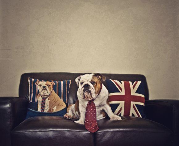 Puppy Shack Puppies For Sale Brisbane Queensland Australian
