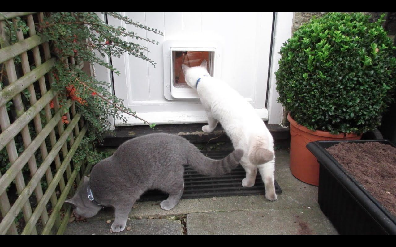 Introducing Our Kittens To The Outside Part 1 Microchip Cat Flap C Cute Kitten Gif Cat Flap Kittens