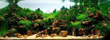 Petrified Wood Aquascape   Pesquisa Google