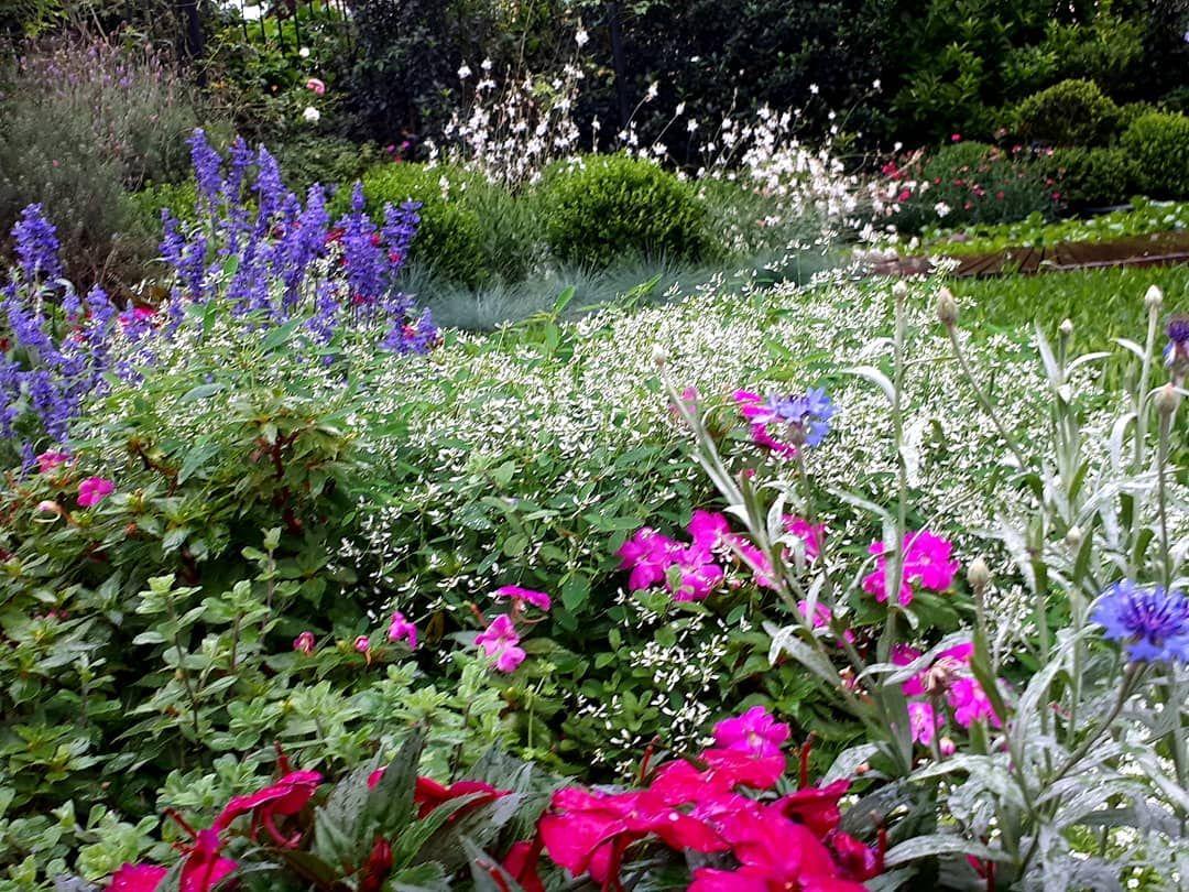 Multicor Instagardens Flores Jardim Jardinagem Jardinagemepaisagismo Paisajismo Paisagismoejardinagem Meujardimf Garten Design Garten Formaler Garten