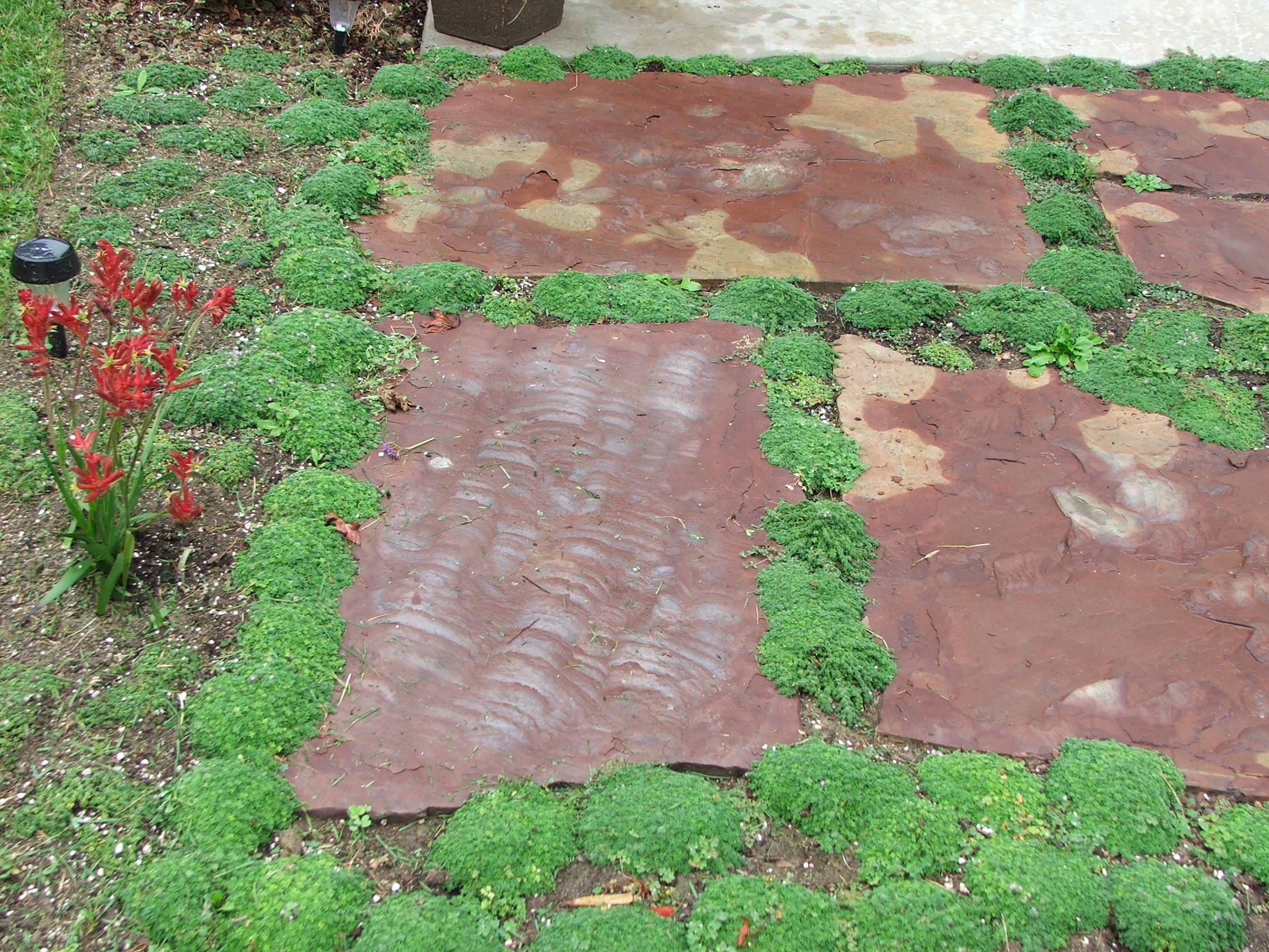 How to plant ground cover between pavers - Landscaping With Pavers Elfin Thyme Used In Landscaping Between Flagstone Pavers