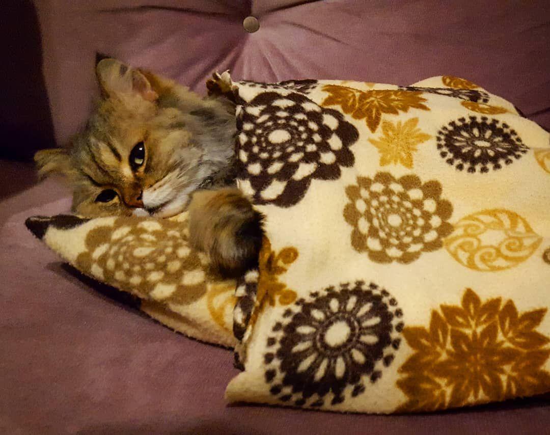 Sleeping time. #sleep #rozi #catoftheday #cathouse #cat #catsfriendship #cats #catsofinstagram #persian #persiancats #persiancatsofinstagram #pet #persiancat #kitten #kittensofinstagram #kitty #katze #gatos #neko #kediseverler #kediaşkı #kedi #kediş #catlove #meow #mao #猫 #instapersiancats #instacat_meows #maa